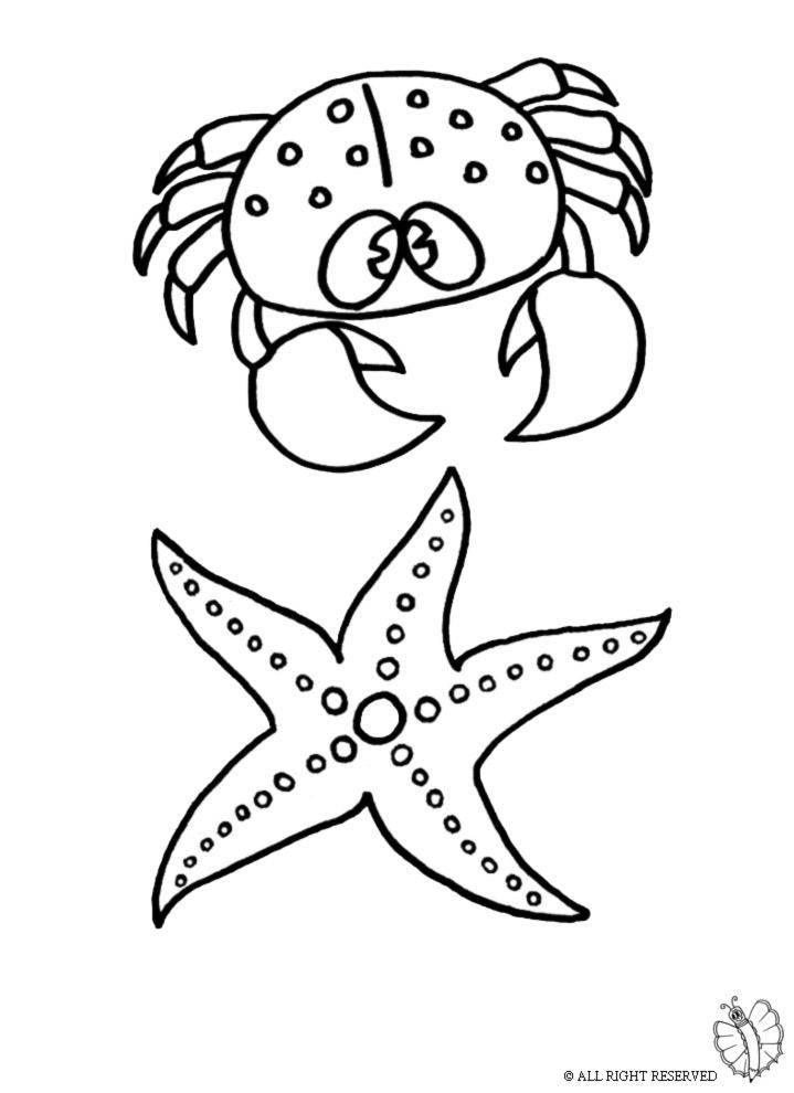 Top Disegno di Animali Marini da colorare per bambini  BY98
