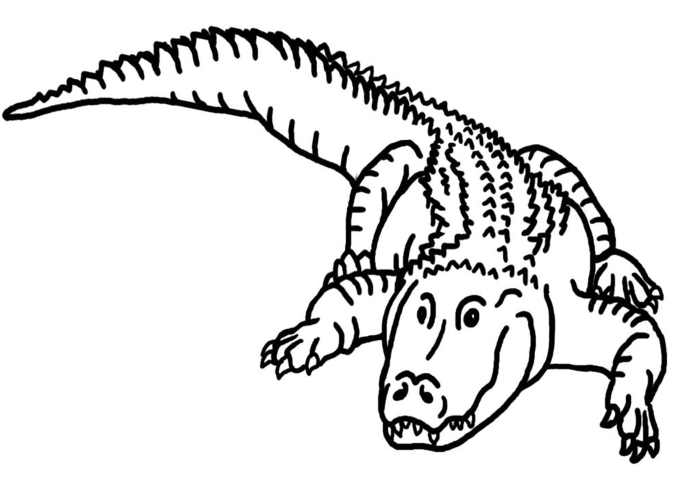 Disegno Di Il Coccodrillo Da Colorare Per Bambini