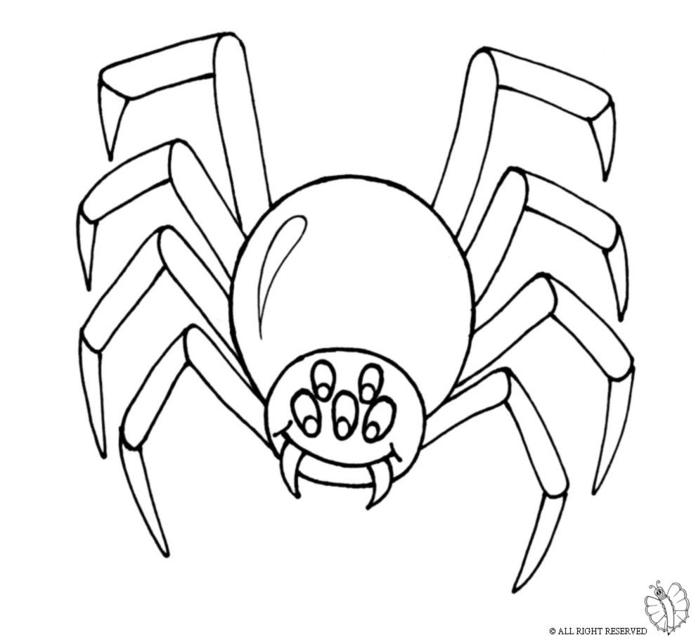 disegni da colorare halloween ragni