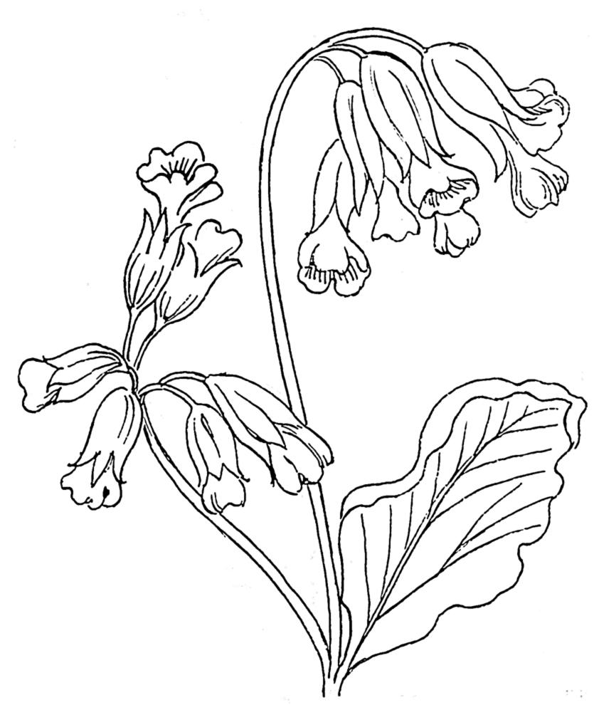 Famoso Disegni di Primavera da colorare per bambini  BL59