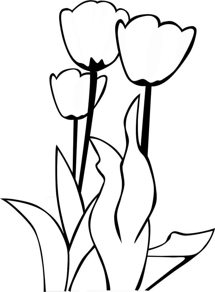 Disegno di un tulipano fiori idea immagine for Disegno di architettura online