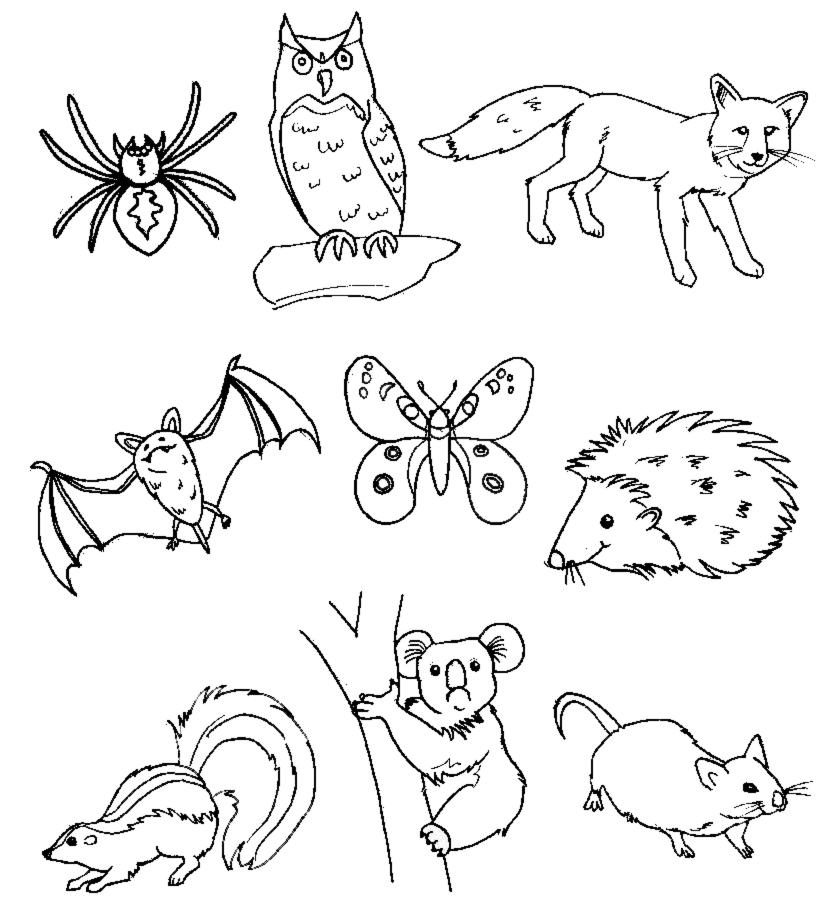 Favoloso Animali da Colorare - Disegni per Bambini da Stampare e Colorare EG19