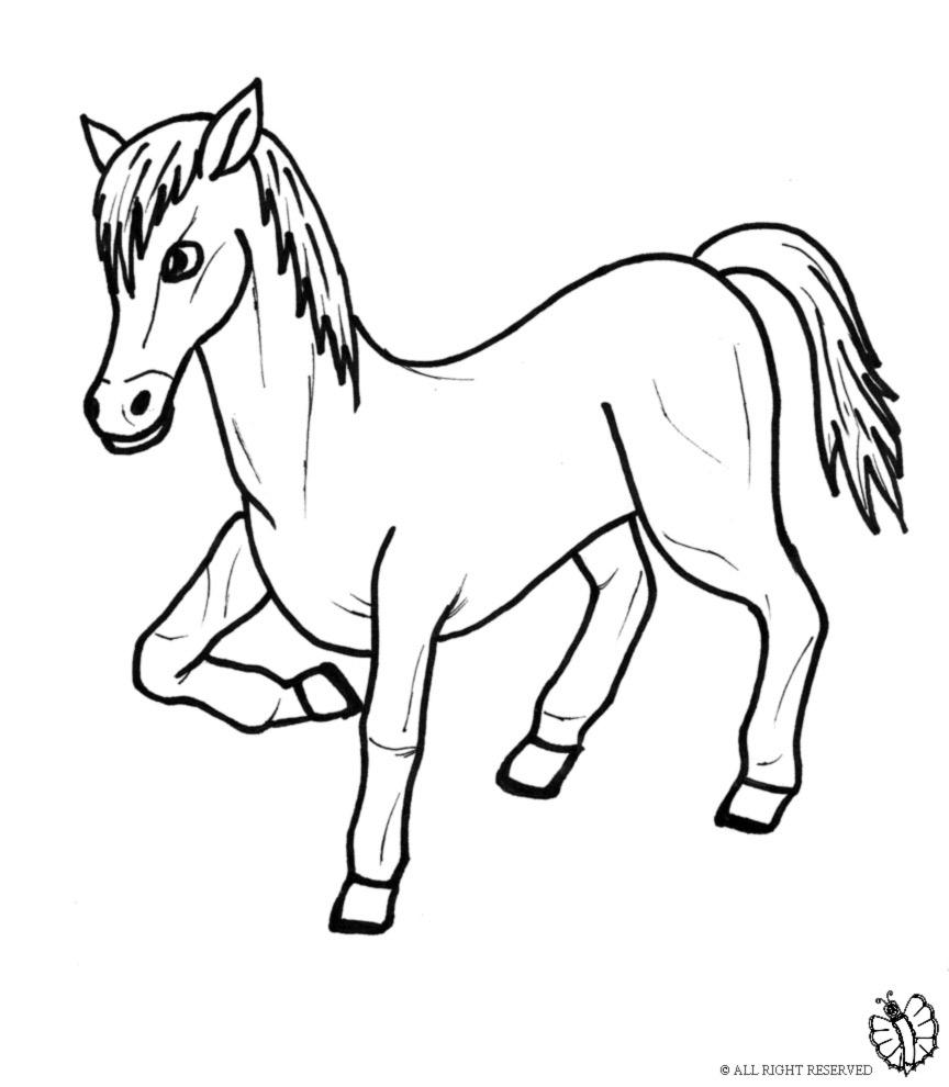 disegni da colorare cavalli pony